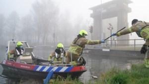 Weert vraagt om maatregelen tegen verdrinkende reeën in Zuid-Willemsvaart