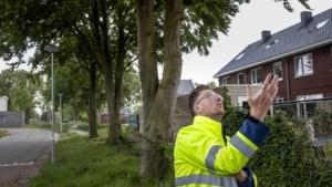 Advies als service voor eigenaren van een beschermde boom in Nederweert