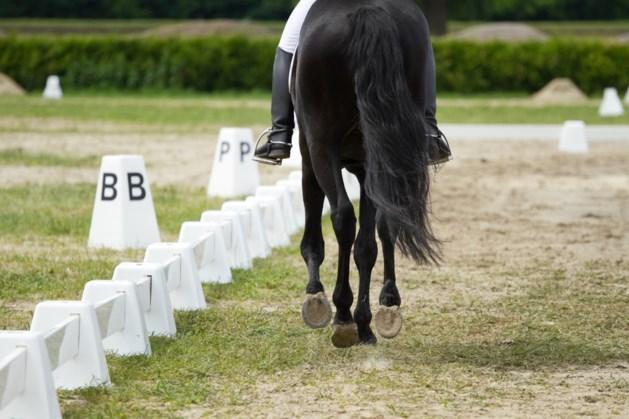 Meetmomenten vervangen officiële wedstrijden in Limburgse paardensport