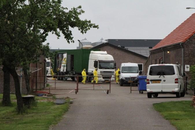Ruimen van dieren begonnen na uitbraak vogelgriep op kalkoenbedrijf in Weert