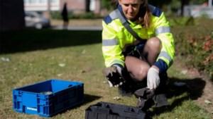 Maastricht start met 'slimme' rattenval in het riool