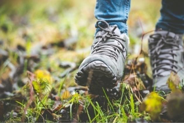 Op zoek naar de mooiste wandelomgeving van Nederweert