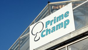 Ja, Prime Champ was slechte werkgever. Nee, er was geen sprake van moderne slaverij