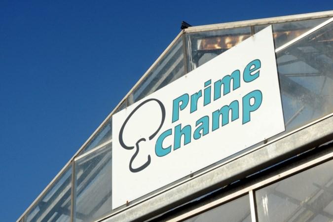 Ja, Prime Champ was een slechte werkgever. Nee, er was geen sprake van arbeidsuitbuiting of moderne slaverij