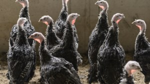 Einde ophokplicht door uitbraak vogelgriep in Weert nog niet in zicht