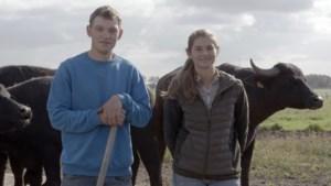 Vier stellen volgen hun boerendroom in tv-programma 'De kleine boerderij': een knuffel van een buffel