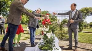 Een roos ter ere van het 175-jarige jubileum van De Limburger: een geschenk aan alle Limburgers
