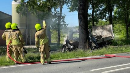 Inzittende busje overleden na botsing tegen boom in Grathem