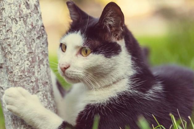 Inbrekers richten flinke schade aan bij kattenopvang in Asenray: 'Echte held ben je dan, stelen van een stichting'
