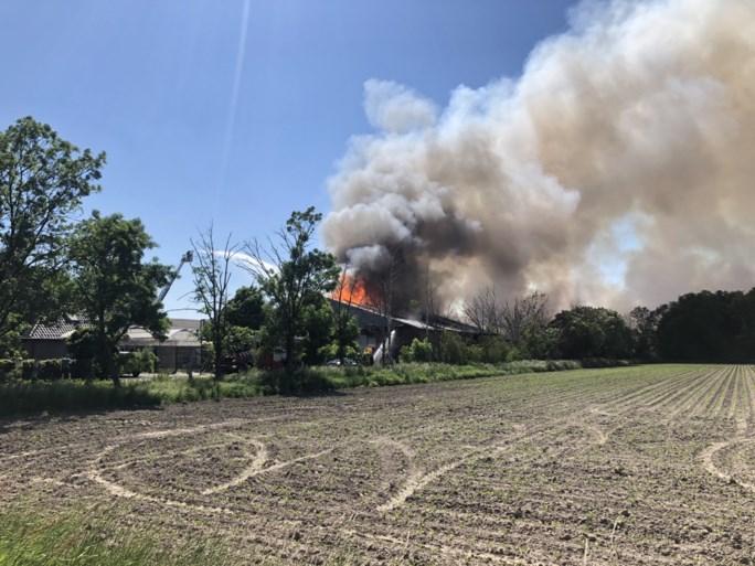 Video: Grote brand in stal met 4600 varkens in Nederweert