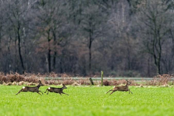 Politie heeft tiental Limburgse stropers in beeld, voorzitter faunabeheer: 'Het is tuig'