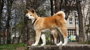 Valkenburg gaat huis aan huis controleren op hondenbezit