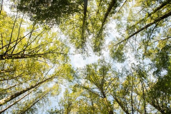 Ene na andere locatie voor levensbomenbos in Stein valt af, gemeente komt met alternatief