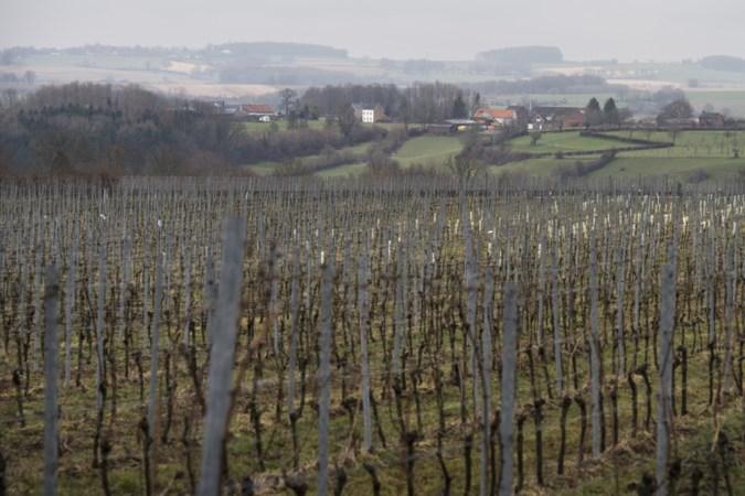 Alle banden van tractoren wijngaard Sint-Martinus in Vijlen lek gestoken