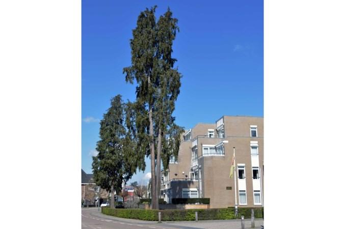 Kappen zwiepende, oude cipressen leidt tot verdeeldheid onder bewoners appartementen in Valkenburg