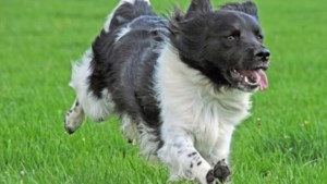 Controle hondenbelasting in Roerdalen