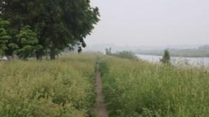Paden, rotondes en bermen overwoekerd: inwoners van Stein vrezen hooikoorts, teken en onveilige situaties