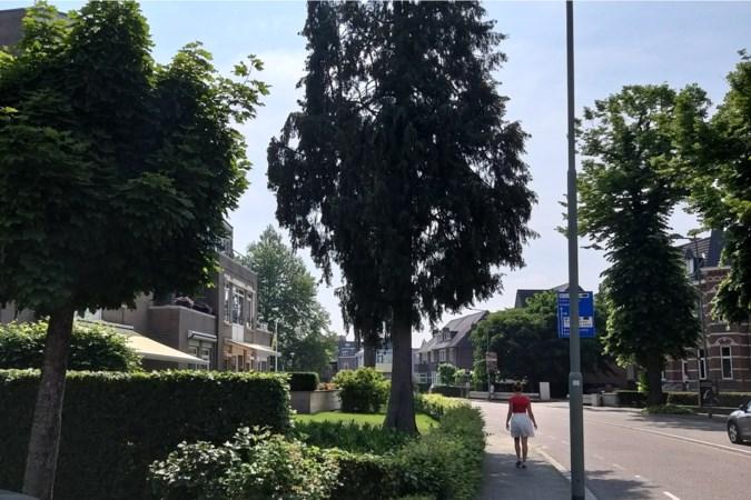 Bomentoets Valkenburg voorziet niet in slanke exoten als zwiepende cipressen
