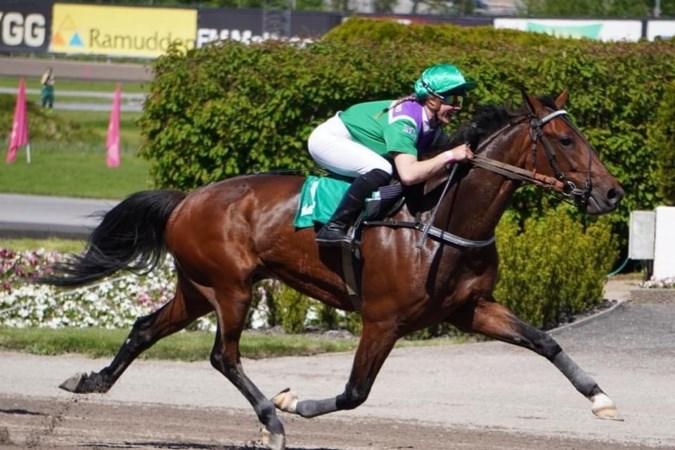 Paardenfokker Jean Huls glundert over prestatie 'Dreambreaker': 'Zeven keer winnen op de grote draf in Parijse en dan nu dit wereldrecord'