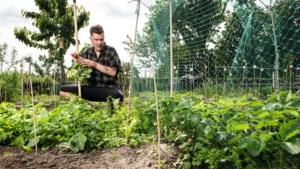 Opeens bleek Eelco uit Echt groene vingers te hebben, nu kweekt hij zijn eigen groenten in de volkstuin Hingen