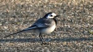 Mens & Natuur: Niet alle vogels zijn welkom onder de zonnepanelen
