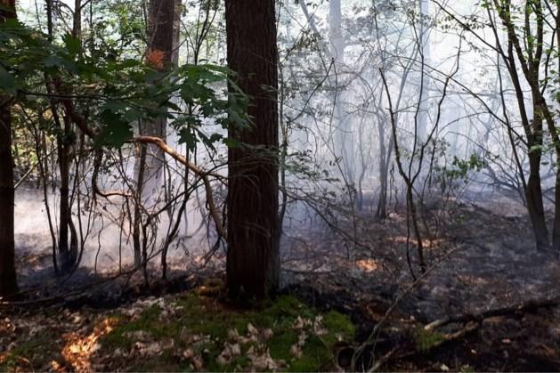 Meerdere brandhaarden op Brunssummerheide, vuur onder controle