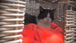 Dier van de week: katten Tarzan Sjors en Nala hebben een rugzakje en zijn op zoek naar een baas die hen de ruimte geeft