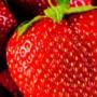 'Superaardbei' eerste zet van Platform Agrotoerisme