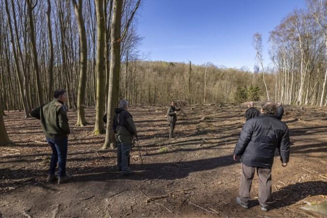 SP vindt bomenkap in Landgraaf te gortig en stelt er een zwartboek over samen