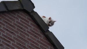 Kat op dak woning Weert: brandweer gealarmeerd