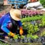Tuin vergroenen? De gemeente Eijsden-Margraten betaalt mee