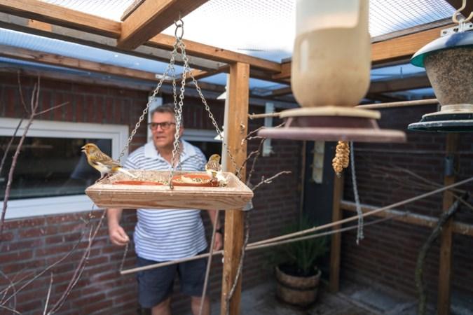 Ger uit Born kweekt kanaries: 'Je doet het voor de bevestiging dat je mooie vogels kweekt'