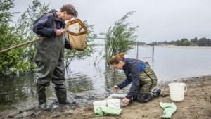 Last van jeuk na het zwemmen in natuurplas Reuver: 'Het leken wel muggenbulten'