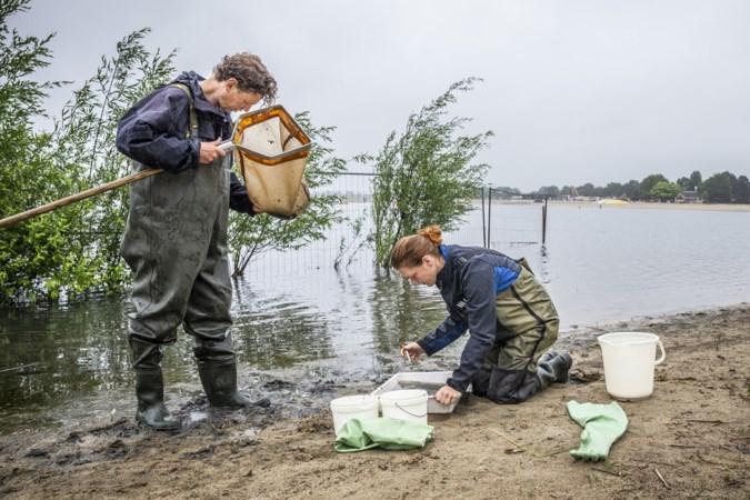 Onder de bultjes en last van jeuk na het zwemmen in natuurplas Reuver: 'Het leken wel muggenbulten'