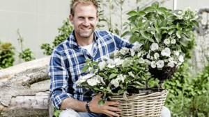 Boer Tom: In het hart van de hortensiabloem zit een klein speldenknopje