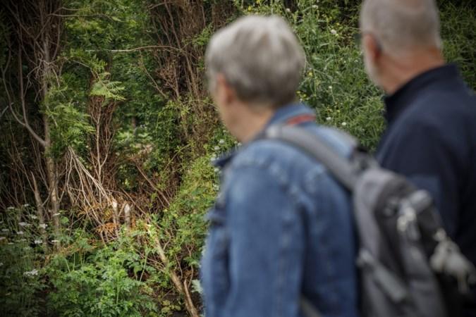 Bever houdt huis langs beekje in Thorn: 'Hoeveel het er zijn weet ik niet, maar wat ik wel weet is dat mijn coniferenhaag eraan gaat'