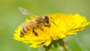 Meer weten over de wereld van de honingbij? Ervaar het met eigen ogen