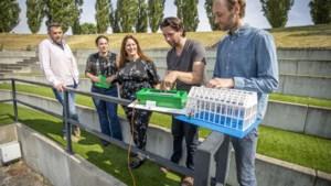 Kas regio Venlo gaat warmte datacenter van Heerlense start-up gebruiken: 'Zo verstookt de tuinder minder gas'