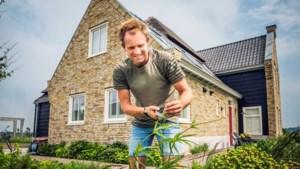 Tuinieren met boer Tom: zomersnoei voor tweede bloei, maar vooral om te fatsoeneren