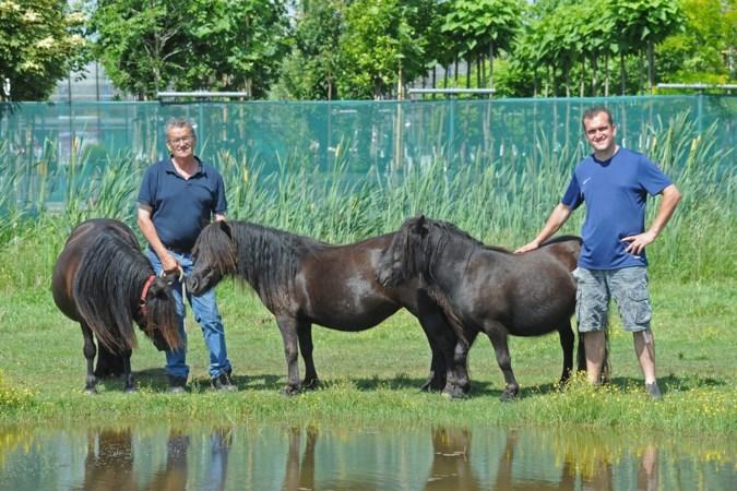 Vader en zoon Jacobs hebben een tweede baan aan de Shetlanders van de Eulesberg
