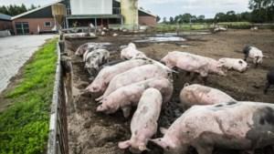 55 Limburgse varkensboeren gebruiken regeling geld en stoppen met hun bedrijf