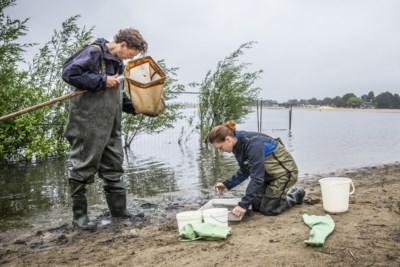Waterschap na onderzoek: er zitten geen parasieten in het zwemwater van Drakenrijk Reuver