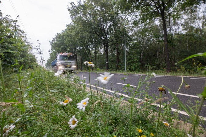 Einde overlast eikenprocessierups? Zuid-Limburgse gemeenten staan mede aan de wieg van een oplossing