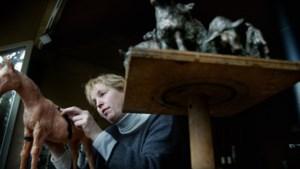 Beeldentuin  Vera de Haas leeggeroofd: 'Verschrikkelijk, dit was mijn levenswerk'