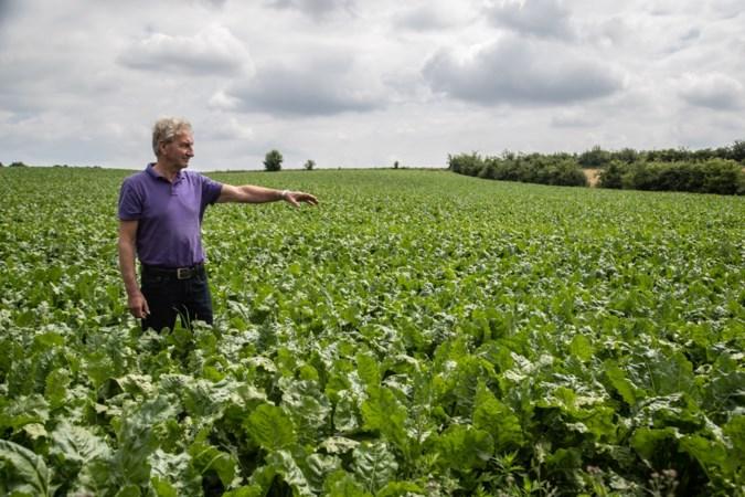 'Zuid-Limburgse boeren doen al veel tegen wateroverlast'