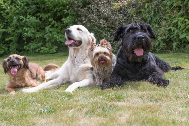 Omwonenden stappen naar rechter om komst hondenpension Grathem tegen te houden