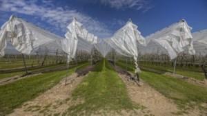 Fruitveiling Zuid-Limburg aan boord bij veel grotere FruitMasters: 'We zijn te klein voor het tafellaken'