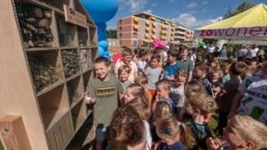 Bioloog in de dop Raf (11) regelt insectenhotels en chillbank voor Amstenrade