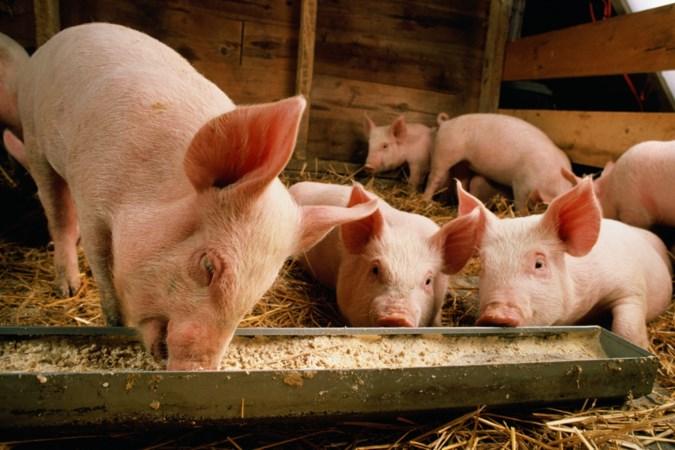 Na twintig jaar toch weer voedselafval in diervoeder, kan dat?