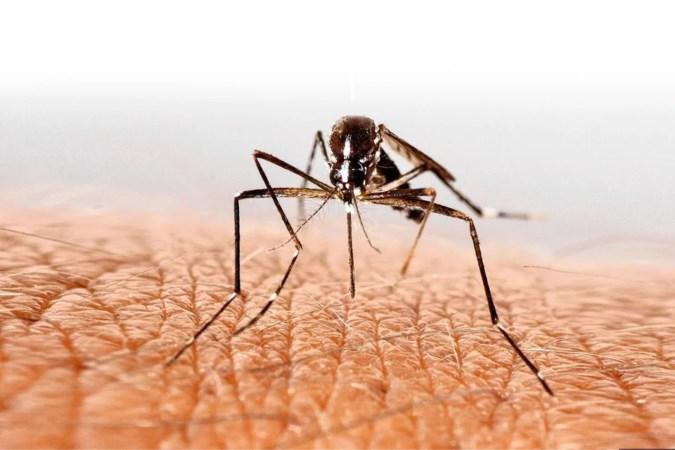 De muggen komen eraan, expert verwacht ware plaag deze zomer